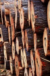 I'm a Lumberjack!