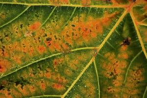 Autumn colours - Yvonne Sears