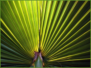 Corrugated Fan - Adrian Hill