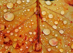 Rain Droplets 1- James Allan