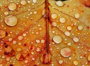 Rain Droplets 1- James Allan
