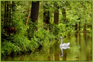 Spreewald tranquility #1 - Theo Prucha (open)