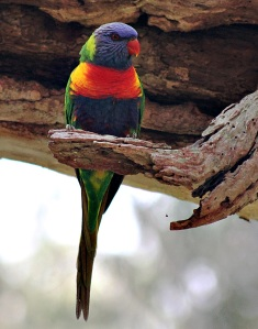 A splash of colour - Yvonne Sears