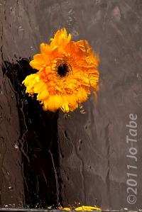 Blooming - Jo Tabe (set)