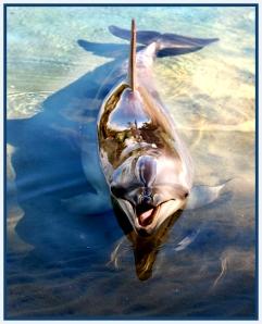 Silver Dolphin - Ursula (Set)