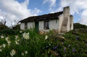 Mikkira Cottage - Jo Tabe (Open)