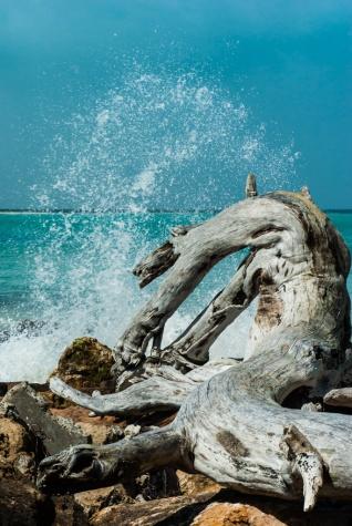 Driftwood echos - Chris Schultz