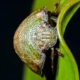Leaf Beetle - Chris Schultz