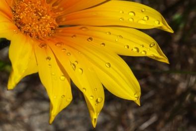 Bejewelled flower - Chris Schultz