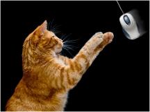 Cat and Mouse - John Vidgeon (Hutt Street Photo Award winner)