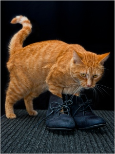 John Vidgeon - Puss in Boots (Colour prints - set)