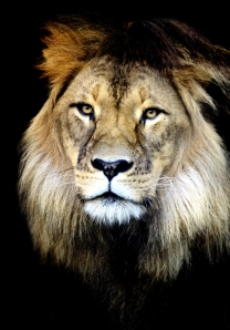 Helen Whitford_King of Beasts