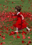 Helen Whitford_It's Raining Poppies_Set