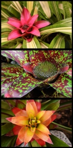 Bromeliads - James Allan - Open