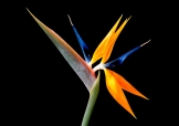 2nd - Jim McKendry_Bird of Paradise