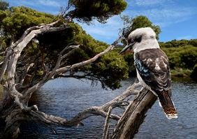 Jim McKendry_Kookaburra Lagoon_Open