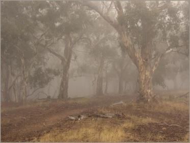 2nd Heather Connolly_April Fog