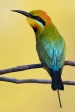 1st_ James Allan _ Bee Eater