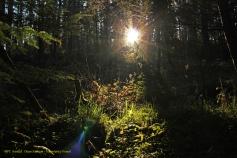 [16] Dean Johnson - Hamsterley Forest
