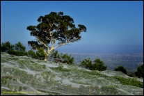 [32] Helen Whitford - Tree 'n' Vines