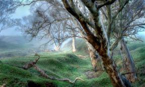 Alberto Giurelli - Morning Fog