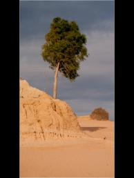 Steve Wallace_Mungo Tree_Set