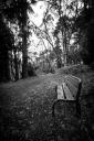 Chris Schultz_Bench_In the spirit of Arthur Farmer a bench on Blackwood Lane. Preferred the mono treatment here.