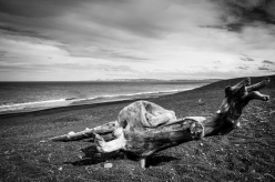 """Chris Schultz_Drift Log_The """"beach"""" of Napier is a dangerous place. This a pebble beach and apparently drops away sharply at the waters edge. So watch out for the real monster"""