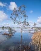 Gloria Brumfield - Wetlands