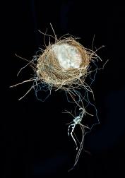 Helen Whitford - 21st Century Bird's Nest