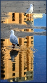 Helen Whitford_City Gulls