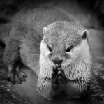 Helen Whitford - Dear God, Please send Fish