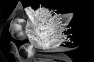 Jo Tabe_Little Bloom_Open