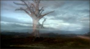 Alberto Giurelli - Ghost Tree
