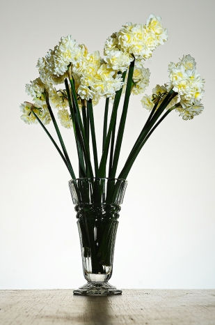 Jonquils - James Allan