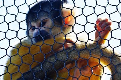 Caged - James Allan