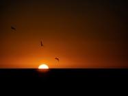 Sunset at Brighton - Anthony Kernich