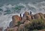 Joy Sherriff - Surf's Up