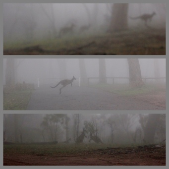 Heather Connolly - Foggy Roos