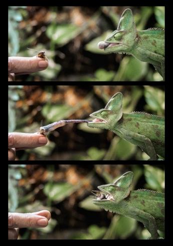 Judy Sara - Hand Feeding