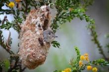 Purse Slipper Nest - James Allan