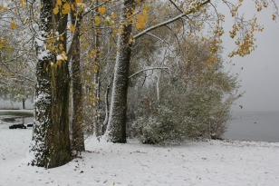 Autumnal Snow - Bron Williams