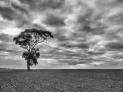 Alone - Anthony Kernich