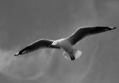 Eye in the Sky - Helen Whitford