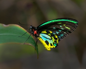 Bright Butterfly - Gloria Brumfield