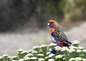 A Bird in the Bush - Helen Whitford