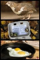 Howard Seaman - Gourmet Breakfast