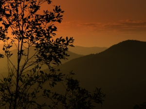 Oriental Silhouette - Howard Seaman