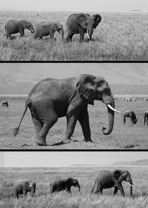 James Allan - Elephant on the Plain