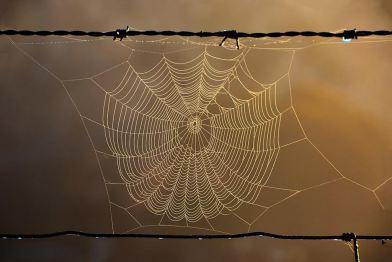 Web - James Allan